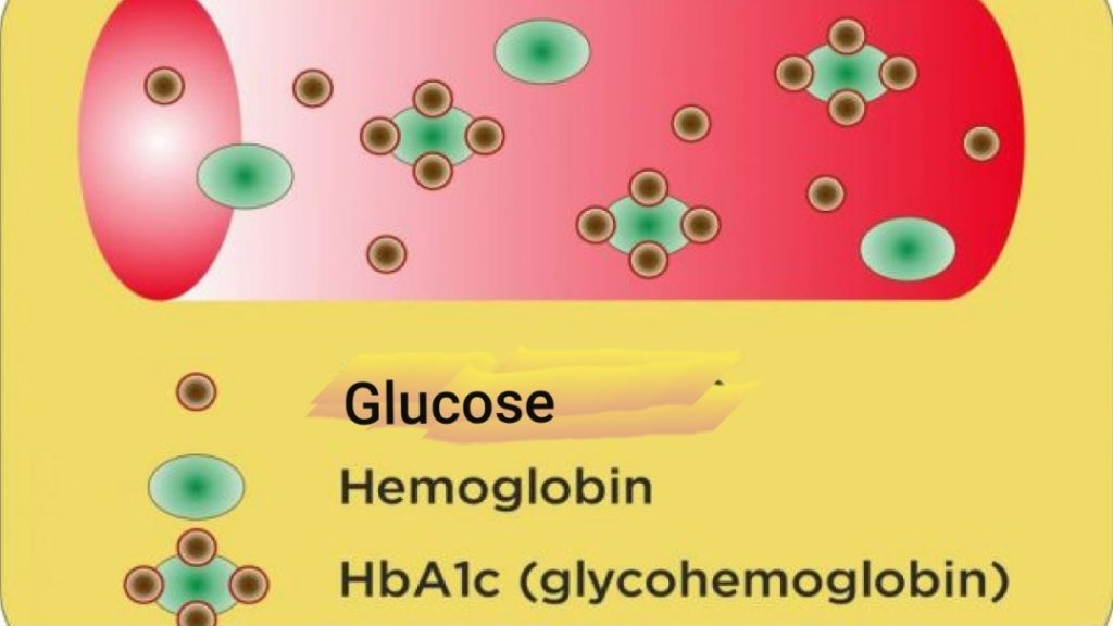 the formation of hba1c